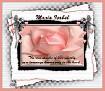 Maria Isabel-gailz-pink rose