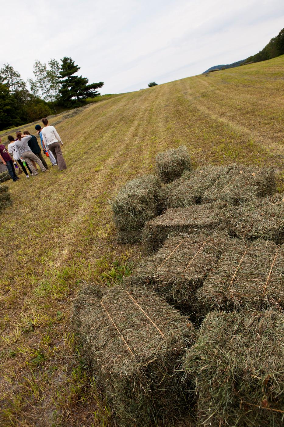 Last Hay-6.jpg