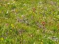 Tons of Flowers EVERYWHERE - Zermatt