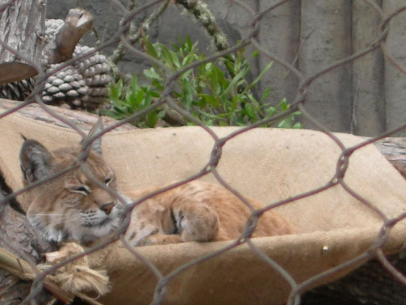 SF zoo 18