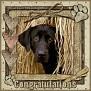 dcd-Congratulations-In The Hay