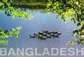 Bangladesh 11
