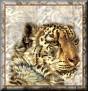 TigerTa