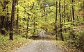 forest-wallpaper-1920x1200-115