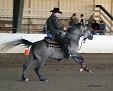 A08 0437 reining