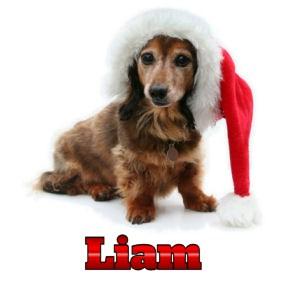 Liam 172