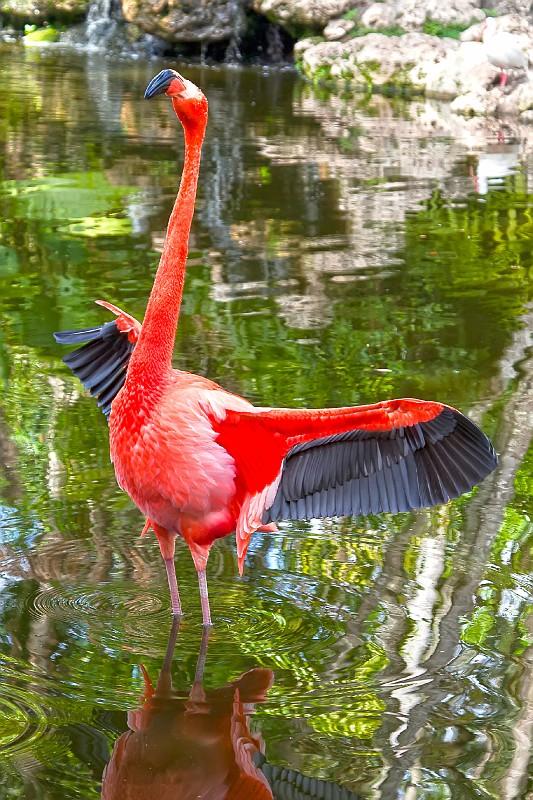 2011_02_26_Miami Vacation_0955_I1.jpg
