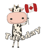 DOTW Tuesday - CanadaDayCow