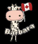 Barbara - CanadaDayCow