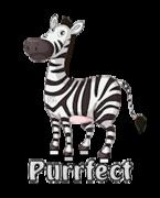 Purrfect - DancingZebra