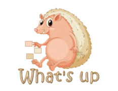 What's up - CutePorcupine