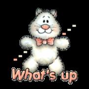 What's up - HuggingKitten NL16