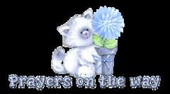 Prayers on the way - CuteKitten