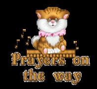 Prayers on the way - CuteKittenSitting