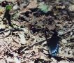 butterfly 9 11 03 -2