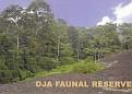 Dja Faunal Reserve