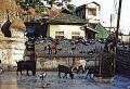 Navagrah or Kamakhya Temple