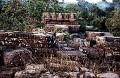 Da Parbatia Temple ruins in Tezpur