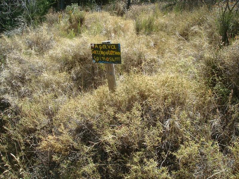 Βοτανικό μονοπάτι στο Αισθητικό Δάσος