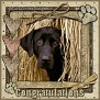 dcd-Congratulations-In The Hay