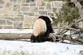 070216 Natl Zoo037