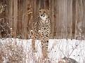 071208 Denver Zoo 0021