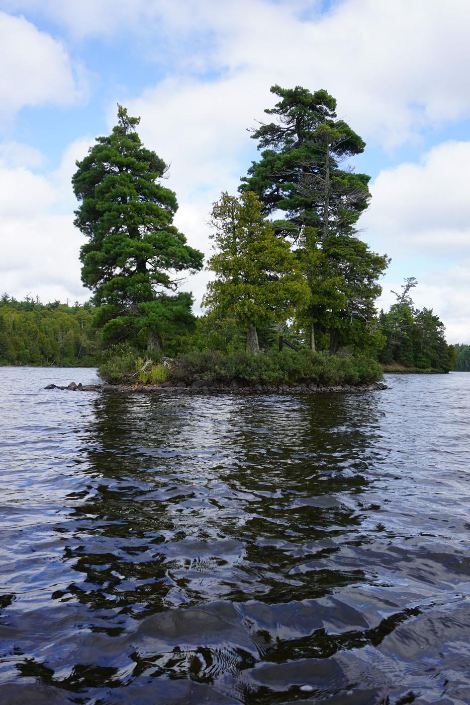 On Alder Lake
