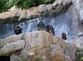 LA Zoo 036