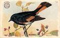 1918 Useful Birds of America Second Series #06 (1)