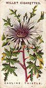 1913 Wills Alpine Flowers #47 (1)