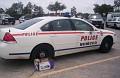 TX - Cy-Fair College Police