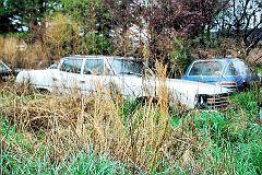 Collier Motors car in weeds