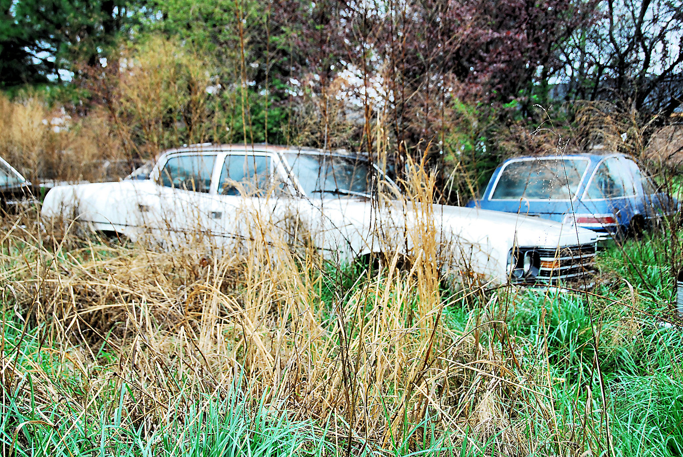 Collier Motors car in weeds