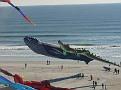 BIG kites.