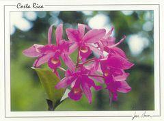 Costa Rica - GUARIA MORADA NFW