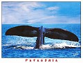 1999 PENINSULA VALDES 3