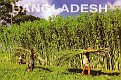 Bangladesh 09
