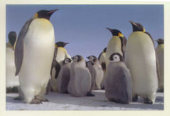 Antarctica - PENGUIN NA
