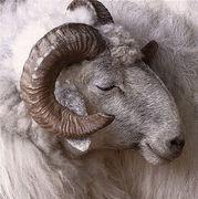 Canada - BIGHORN SHEEP NA