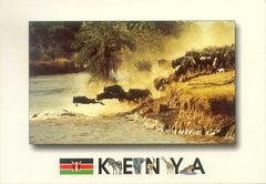 Kenya - WILDEBEEST NA