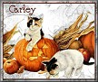 Cats & PumpkinssTCarley