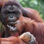 Singapore Zoo Parks 15