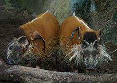 Singapore Zoo Parks 20