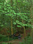 Schwalenberger Wald