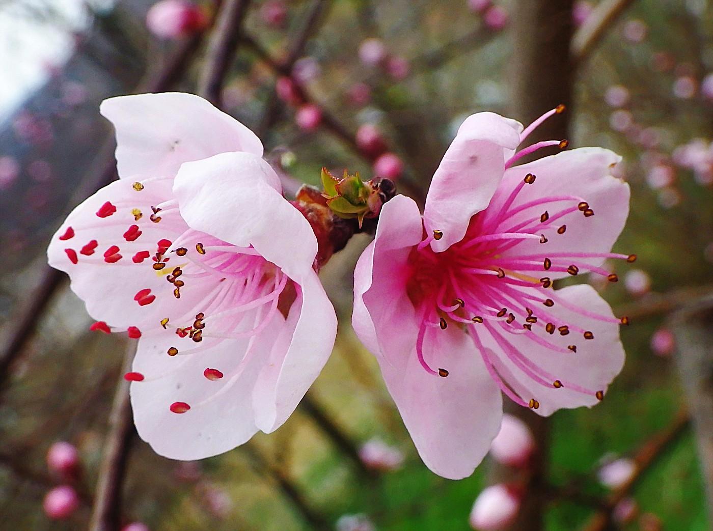 Mediterraner Frühling
