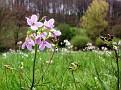 маленький цветочек :-)