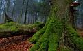forest-wallpaper-1920x1200-015