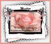 Marilyn-gailz-pink rose