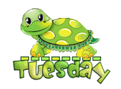 DOTW Tuesday - CuteTurtle
