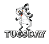 DOTW Tuesday - RaccoonStepOnName